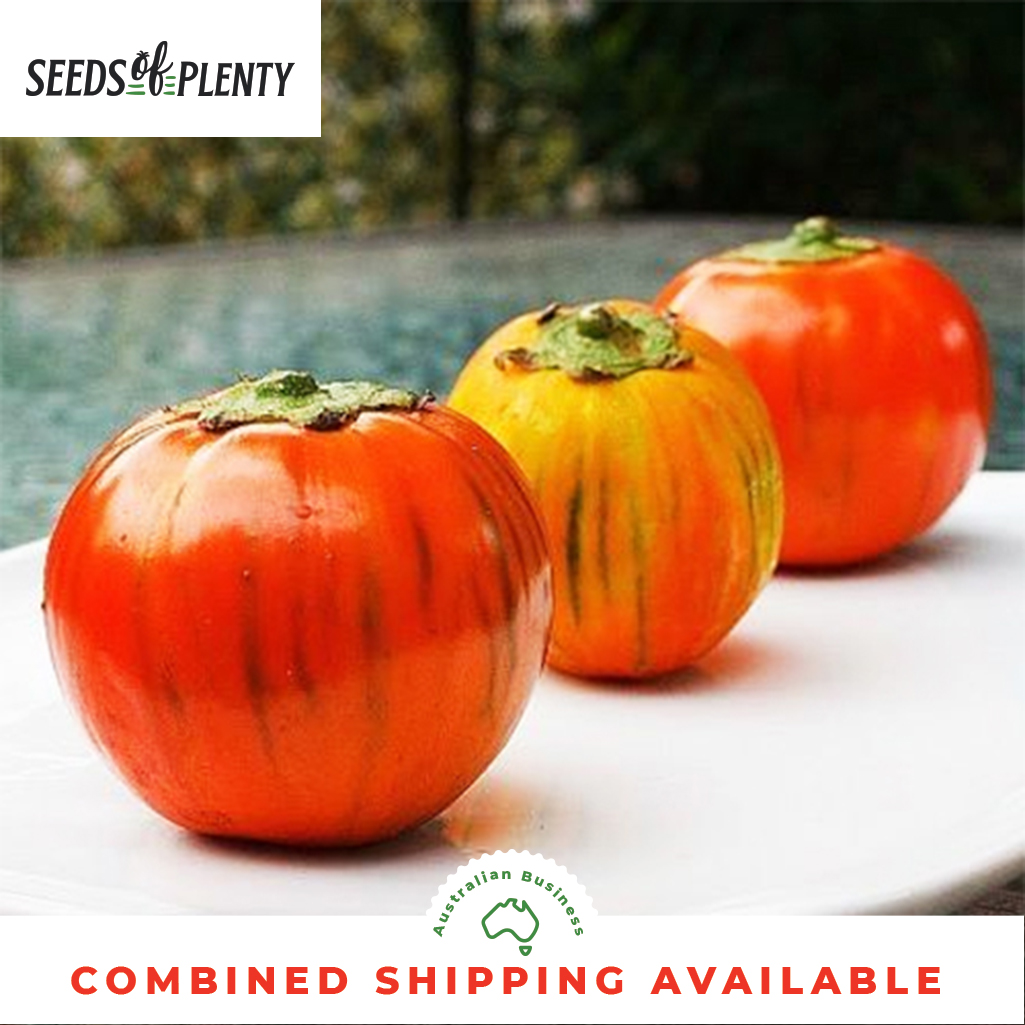 EGGPLANT 400 Seeds CLASSIC HEIRLOOMV VARIETY Bulk Black Beauty
