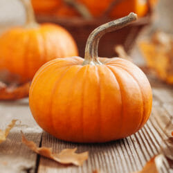 PUMPKIN - Jack Be Little - Cucurbita pepo