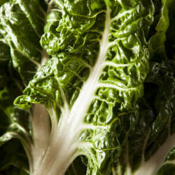 SILVERBEET - Large White Ribbed - Beta vulgaris var. cicla