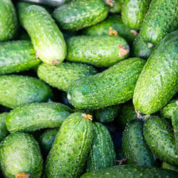 CUCUMBER - National Pickling - Cucumis sativus