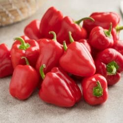 CAPSICUM - Mini Red - Capsicum annuum