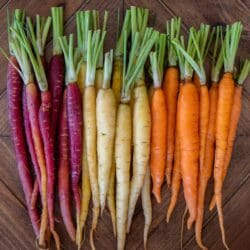 CARROT - Rainbow Mix - Daucus carota