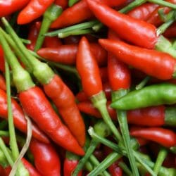 CHILLI PEPPER - Birdseye Thai - Capsicum annuum