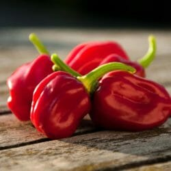 CHILLI PEPPER - Habanero Red - Capsicum chinensis