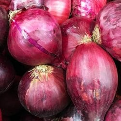 ONION - Ruby - Allium cepa