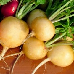 RADISH - Golden - Raphanus sativus