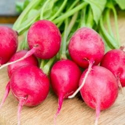 RADISH - Pink Celebration - Raphanus sativus