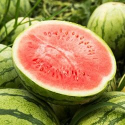 WATERMELON - Warpaint - Citrullus lanatus