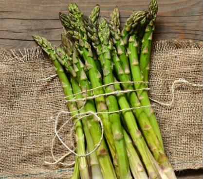 How-to-grow-asparagus-from-seed-in-australia