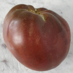 Dwarf TOMATO - Purple Heart - Lycopersicon esculentum