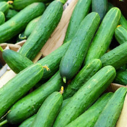 Cucumber - Green Gem (Poinsett)