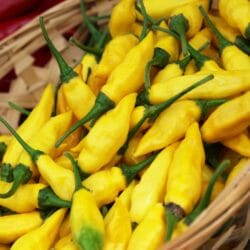 Easy Chillies to Grow