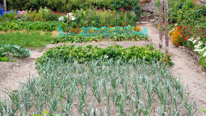 5 Veggies and Flowers to Plant this Spring Blog